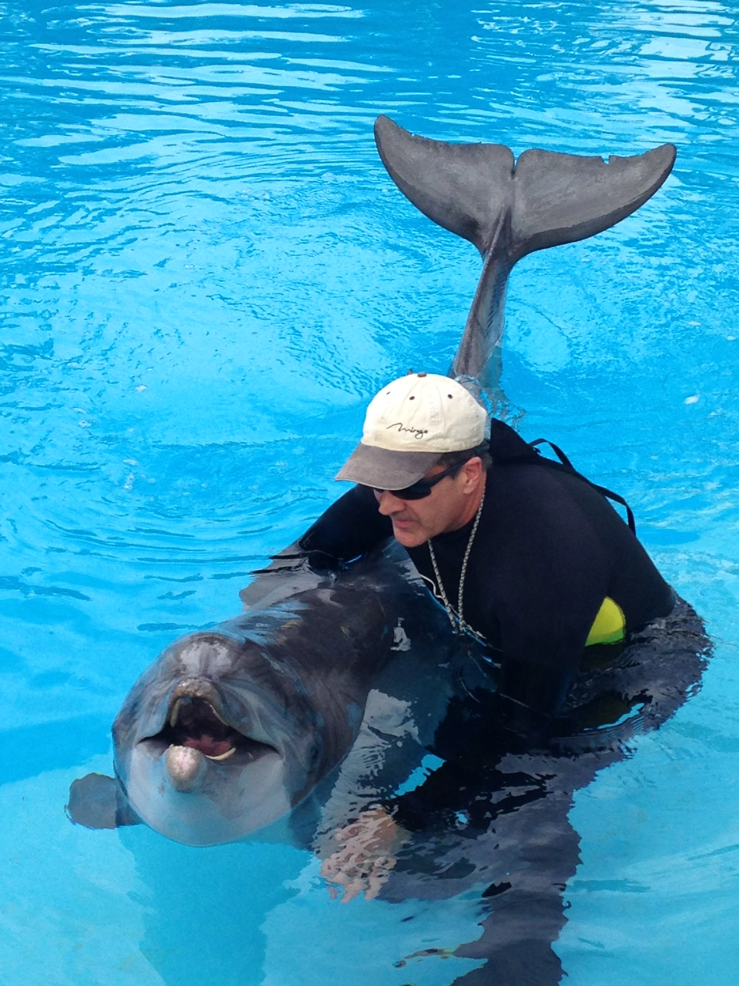 Siegfried Roy 39 S Secret Garden And Dolphin Habitat At The Mirage A Little Bit About A Lot Of