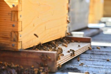 Best Bees 1