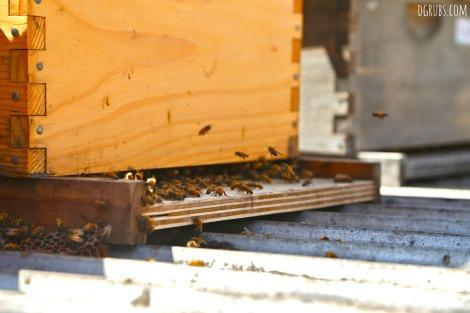 Best Bees 3