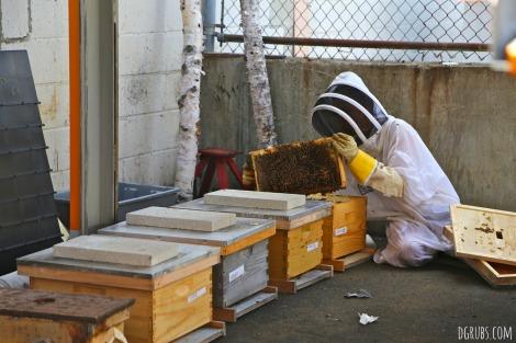 Best Bees 4