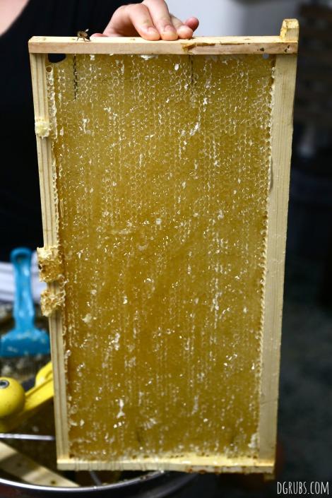 Best Bees 5